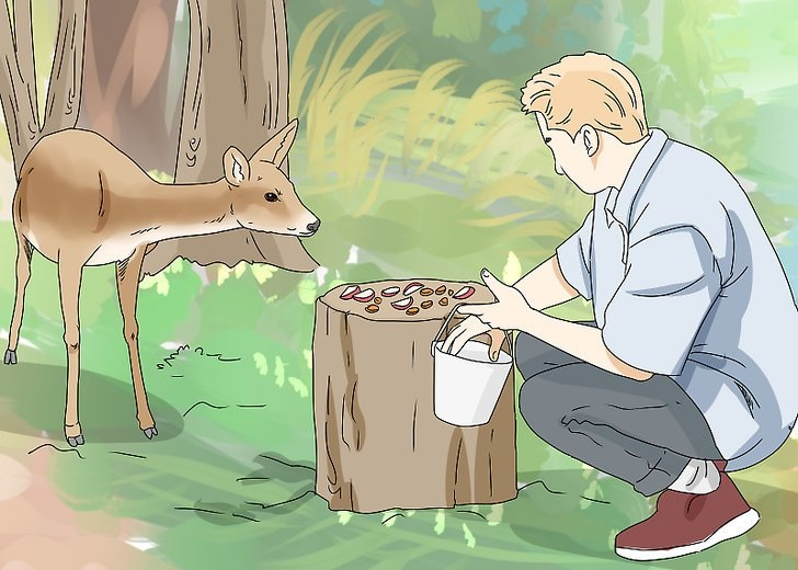 Everything About Feeding Wild Deer Herds In The Backyard!